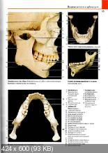 Большой анатомический атлас (2015) PDF
