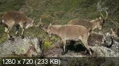 Дикая Иберия / Wild Iberia (2014) HDTV 720p + HDTVRip