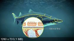 Акулы: Властелины подводного мира (2013) BDRip 720p