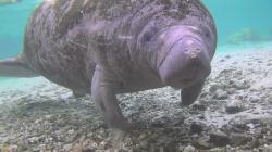 Эверглейдс: Ламантины Кристальной реки (2012) BDRip 1080p