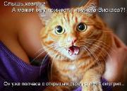 Позитивные котэ 25.06.15