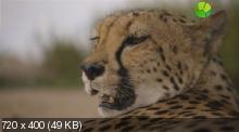 BBC: Уникальные способности животных / Super Senses: The Secret Power of Animals [1-3 серии из 3] (2014) SATRip