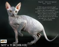 ����� ����� - Cat breed show (2012) JPG