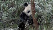 BBC: Мир природы. Ошибки природы (2014) HDTVRip-AVC от Kaztorrents